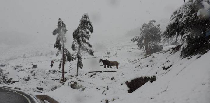 Evalúan declarar en emergencia provincias afectadas por lluvias y heladas