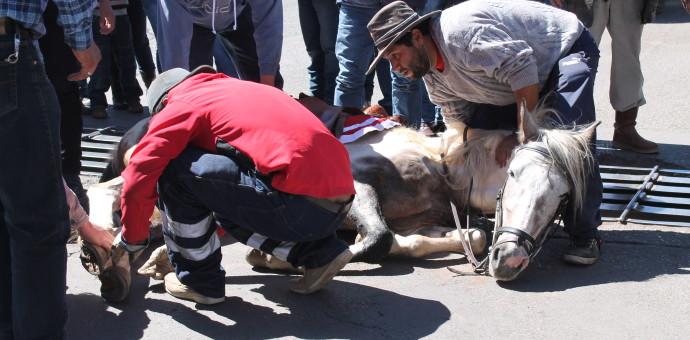 Aprueban castigar maltrato animal hasta con 5 años de cárcel