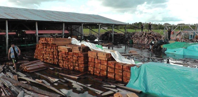 Inmovilizan madera valorizada en un millón y medio de dólares