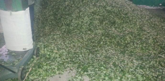Decomisan más de 500 kilos de hoja de coca en la ruta Kosñipata-Paucartambo