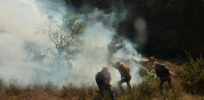 Bomberos exigen al Gobierno Regional implementos para atender incendios forestales