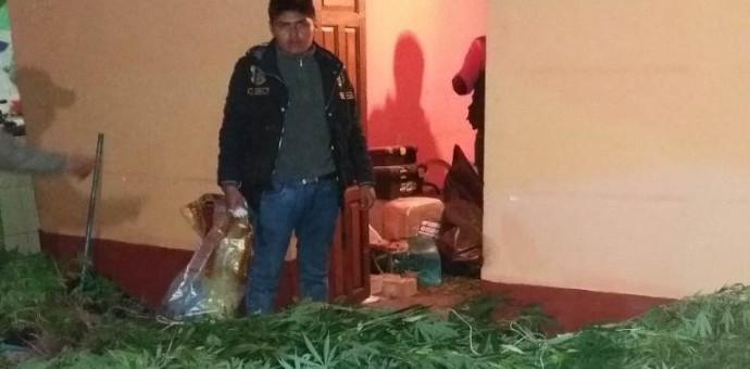 Policía Nacional interviene a dos personas con 444 plantones de marihuana