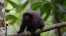 Se publicó en El Peruano DS que reconoce Área de Conservación Regional Qeros-Kosñipata