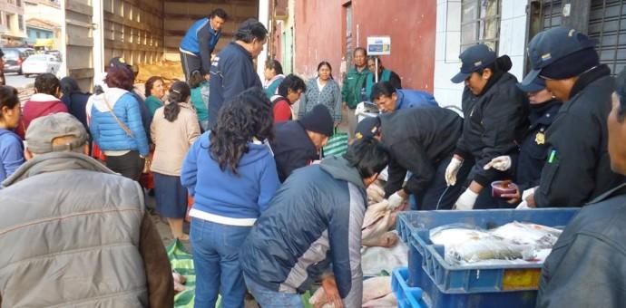 En fiesta de Todos los Santos incautaron 20 kilos de carne de cerdo con cisticercos