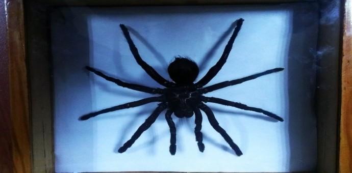 Incautan especies protegidas que eran transportadas por un turista brasileño