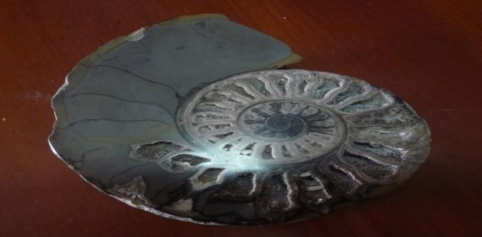 Incautan fósil paleontológico, declarado patrimonio cultural de la nación