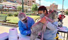 Este domingo 10 de octubre se realizará  la Gran Campaña de vacunación antirrábica canina